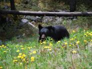 : Urlaub in Kanada: Die Bären sind los