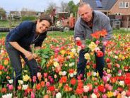 Tourismus: Frühling ist Tulpenzeit in Holland