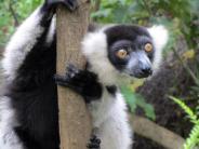 Tourismus: Magisches Madagaskar: Auf der Insel der Lemuren