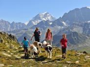 Tourismus: Wunderbare «Schnapsidee»: Alpenwandern mit Bernhardinern