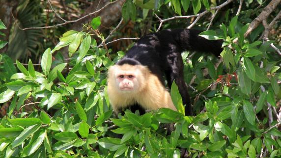 Fernreisen: Von der Stadt in den Dschungel