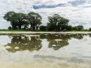 Urlaub im Safari-Camp: Botsuana zur Regenzeit: Wenn die Kalahari blüht