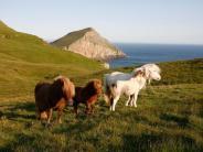 Wind und Wolle: Zu den Webern und Strickern auf den Shetlands