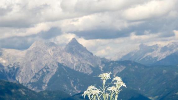 In den Alpen kommt es immer wieder zu Todesf