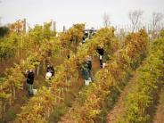 Reisen im Herbst: Veranstaltungstipps: Dänische Weinlese und deutsche Karpfen