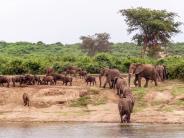 Fernreisen: Wo die Savanne auf den Regenwald trifft