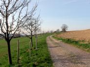 Langenneufnach: Der Streuobstweg blüht auf