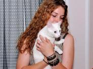 Hurlach: Unbekannter misshandelt Katze