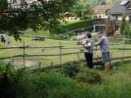 Mittelneufnach: Garten, Tiere und Kunst