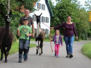 Ursberg: Zur Hochzeit zwei Lamas