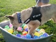 Graben: Ein Trainingsplatz nicht nur für ältere Hunde