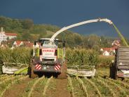 Landkreis: Angst vor weiteren Attacken in Maisfeldern