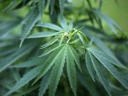 Gericht: Sein Cannabis trocknete er auf dem Wäscheständer