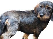 Kleinaitingen: Ein sicherer Platz für Hunde