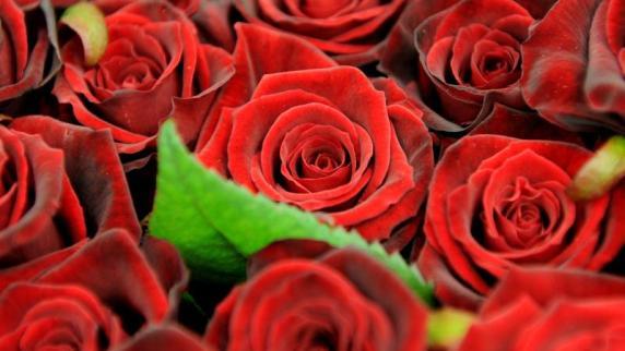Tag Der Liebe: Blumen Zum Valentinstag   Promis, Kurioses, TV   Augsburger  Allgemeine