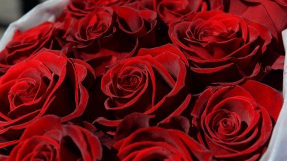 Das Gedicht mit den roten Rosen und blauen Veilchen