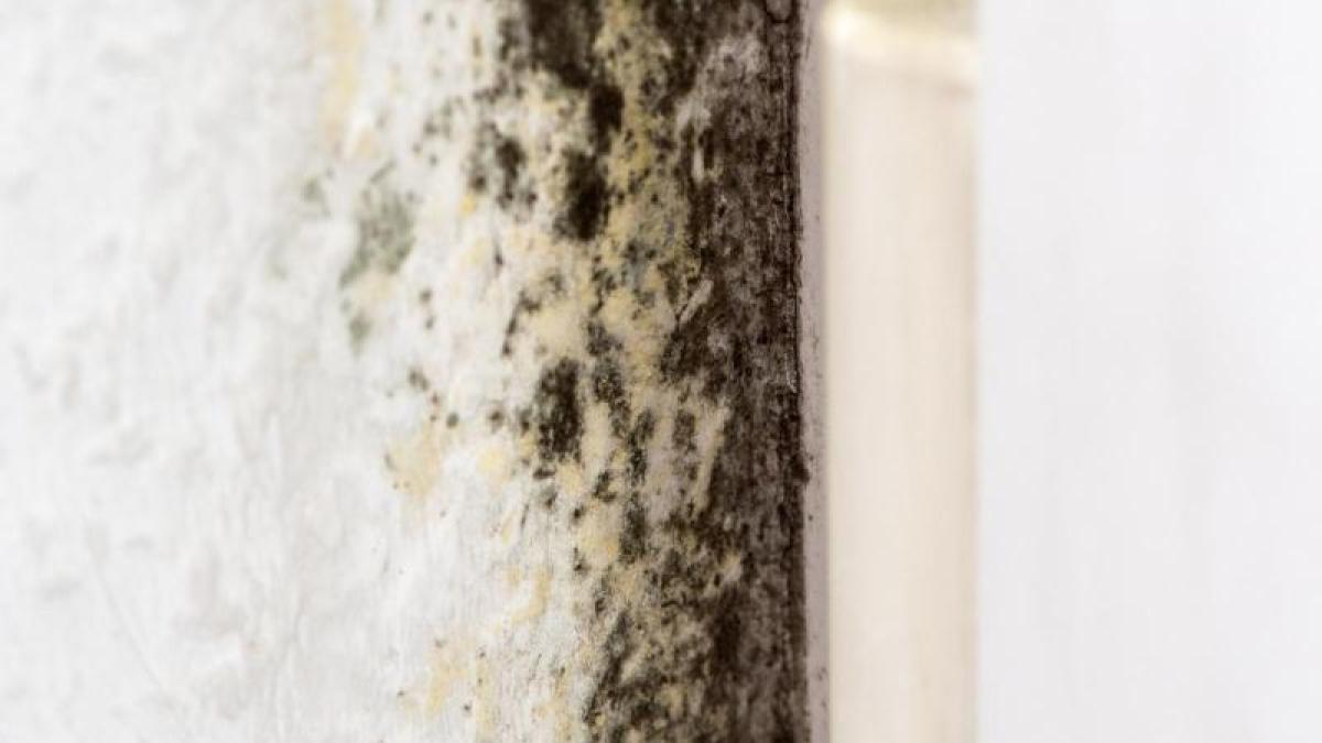 schimmel schimmel in der wohnung kann gef hrlich werden wissenschaft augsburger allgemeine. Black Bedroom Furniture Sets. Home Design Ideas
