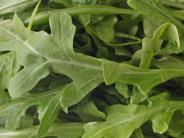 Rucola-Salate im Test: Stiftung Warentest: Rucola-Salate teils mit Nitrat belastet