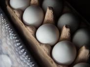 Lebensmittel: Eier-Skandal: EU-Sondertreffen im September