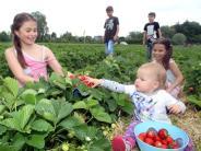 Erdbeeren: Endlich Erdbeer-Saison - Diese Tipps helfen beim Pflücken