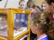 Wertingen: Noch mehr Hühner am Gymnasium