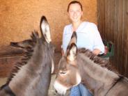 Tierisches im Unteren Zusamtal: Esel und seltene Ponys toben gemeinsam in Hinterried