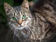 Tiere: Was junge Menschen beachten sollten, bevor sie sich ein Haustier zulegen