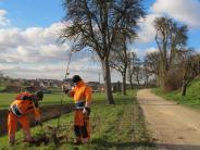 Naturpflege in Hohenreichen: Das Besondere einer Birnbaumallee