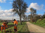 : Das Besondere einer Birnbaumallee