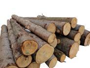 Zimmerer: Sie setzen auf das Holz als Baustoff