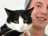 Dinkelscherben: Das Geheimnis der Zug-Katze ist gelüftet