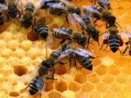Binswangen: Bienenstammtisch will, dass es wieder summt und brummt