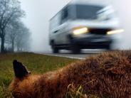 Dillingen: Unfall: Fuchs überrascht Rollerfahrer