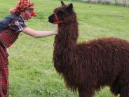 Gottmannshofen: Was macht ein Kamel in Gottmannshofen?