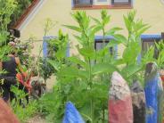 Erdkinderplan: Die Wertinger Villa Kunterbunt