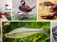 Artenvielfalt: Ungebetene Gäste im Landkreis