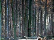 Landkreis Dillingen: Welche Bäume bestehen auch in der Zukunft?