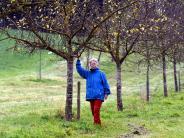 Natur: Dreiste Obstdiebe räumen Bäume leer