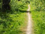 Landkreis: Donautal-Aktiv macht Tempo beim Auwald-Trail