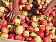 Obst-Preise: Werden Äpfel jetzt teurer?