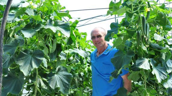 Warum ein Bauer seine Gurken vernichtet