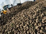 EU-Regulierungen laufen aus: Südzucker will Zucker-Exporte kräftig erhöhen