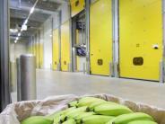 Weltmarkt: Die beschwerliche Reise der Banane