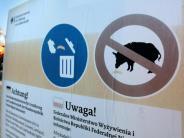 Schweinepest: Schmidt will stärker gegen die Schweinepest vorgehen