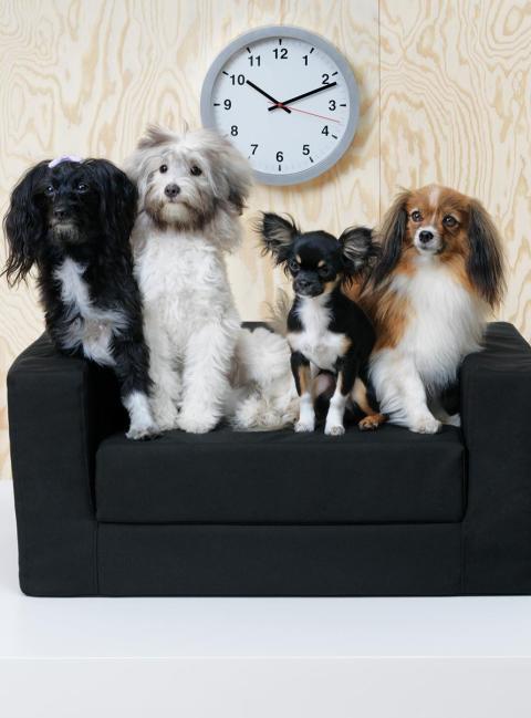 m belhaus belly statt billy ikea nun auch f r hund und katz wirtschaft aktuelle. Black Bedroom Furniture Sets. Home Design Ideas