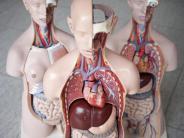 Universität Zürich: So entsteht Leberkrebs