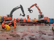 Umwelt: Pottwal-Skelette werden für Wissenschaft präpariert