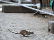 Tiere: Neuseeland willRatten und andere Arten bis 2050 ausrotten