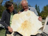 Wissenschaft: Ältestes Originalskelett eines Archaeopteryx zu sehen