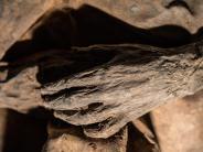 Erreger jünger als gedacht?: Älteste Pockenviren entdeckt